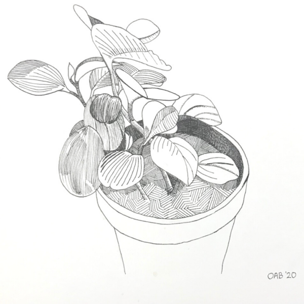 Original ink drawing of a Baby Rubber Plant.
