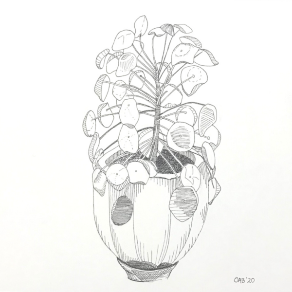 Original ink drawing of a pilea plant in a pot.