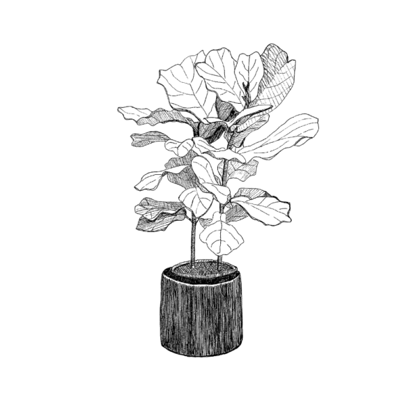 giclee print of ink drawing of fiddle leaf fig